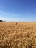 Director of Technical Service Attends Hard Red Spring Wheat Crop Tour