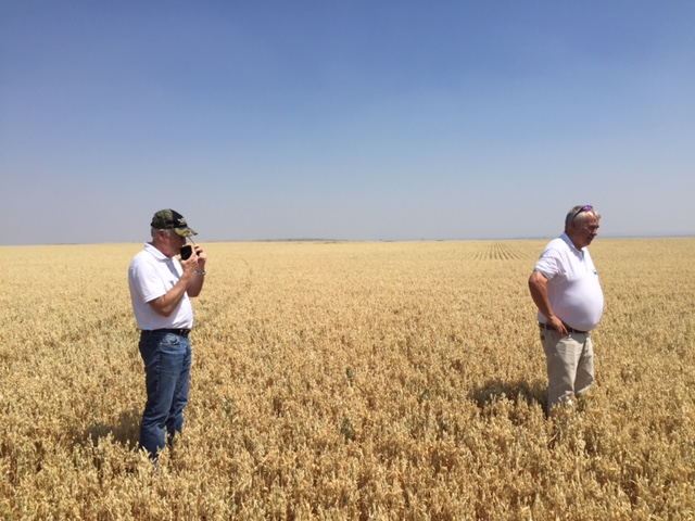Bay State Milling's Dan Collins in a SowNaked Oat field with Gary Iverson from Montana Gluten Free.