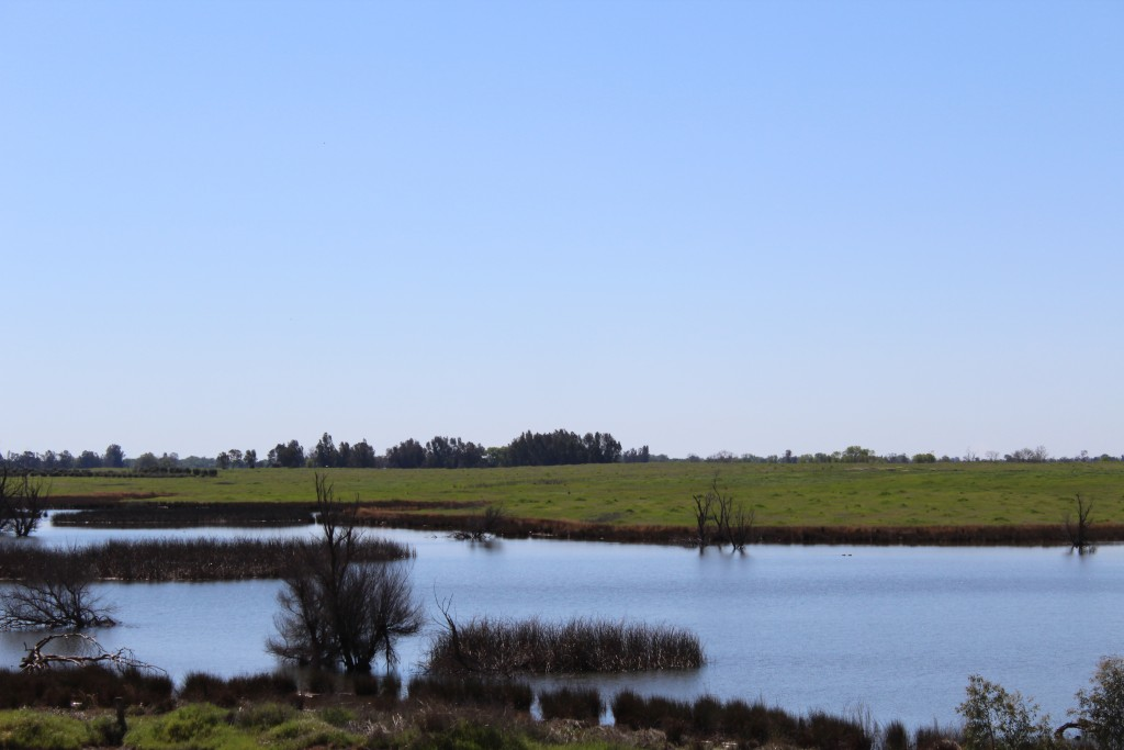 The Lake Oroville Dam and recreational area allows water to be naturally warmed by the sun before being used to flood the rice fields in northern California.
