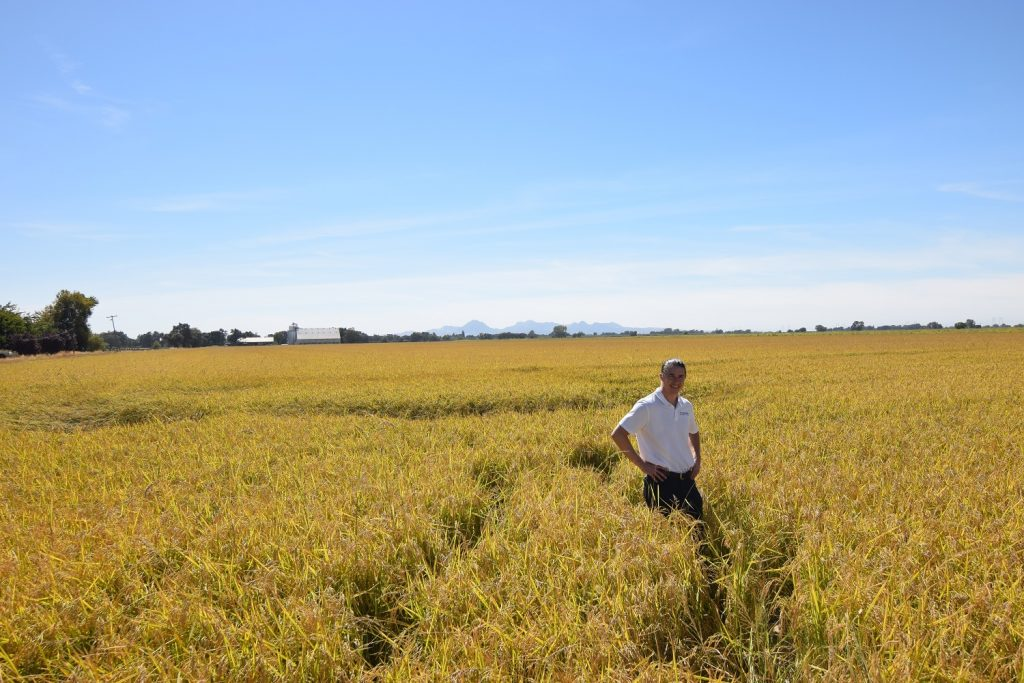 Bay State Milling Company's Brenden Olson in a rice field during a 2018 supplier visit in California.