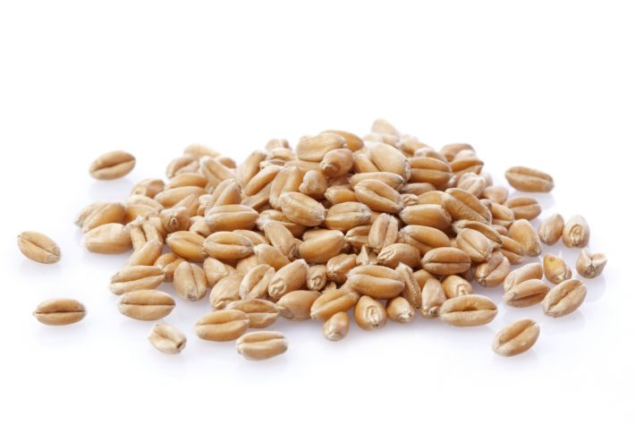 Introduction to the Sprouting Process